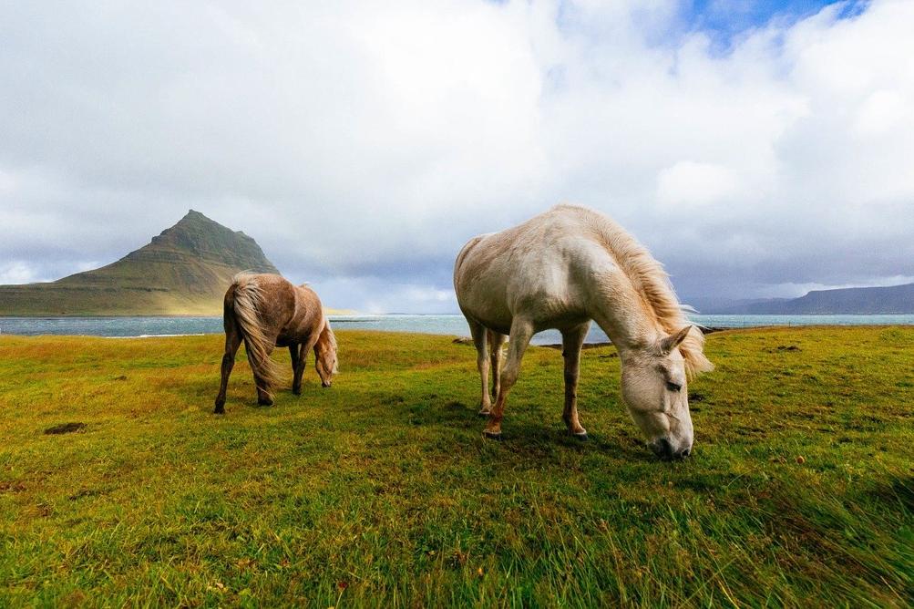 nutrire cavallo condizioni aride