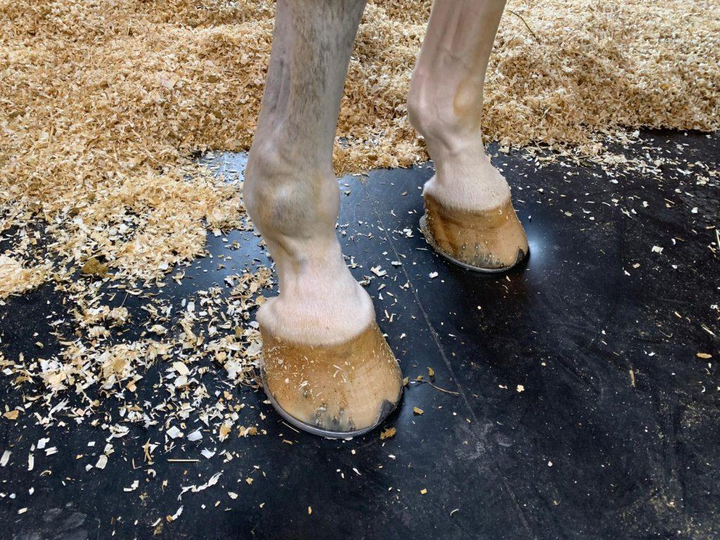 pavimento per cavalli
